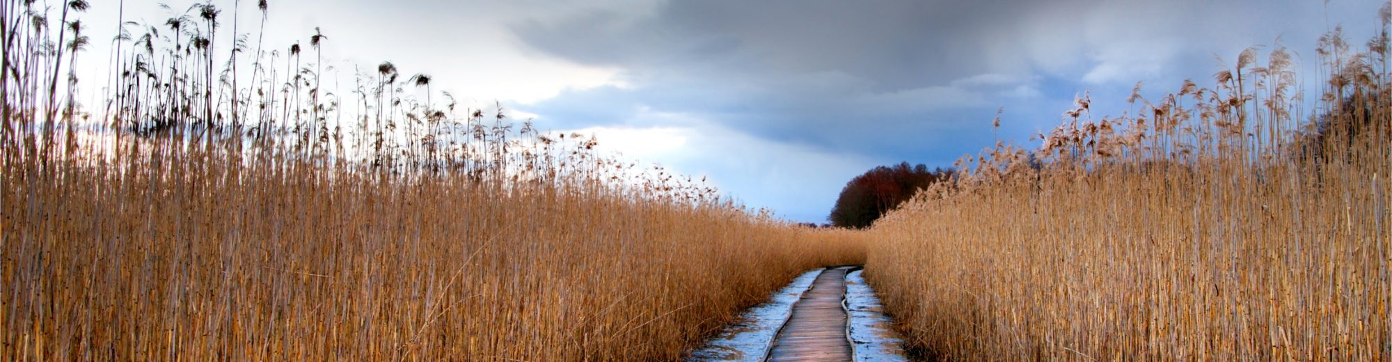 Pathway through marshes